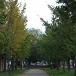秋へのグラデーション