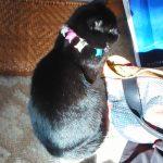 怪しい黒猫教祖さま