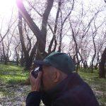 桜モーニング