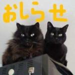 2011 深堀隆介さんの個展はじまってま~す!